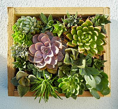 DIY en familia crea jardines verticales caseros en tu hogar